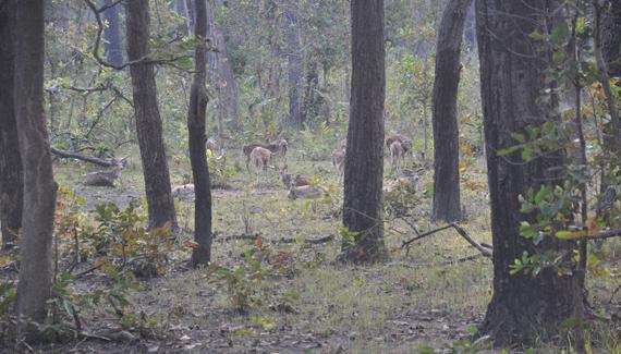shuklaphanta wildlife reserve